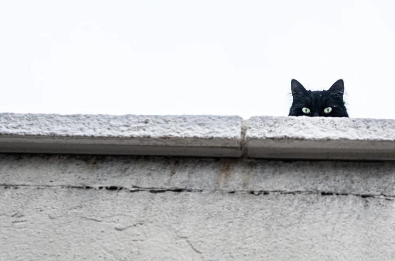 ループイフダンの黒猫さんとは?