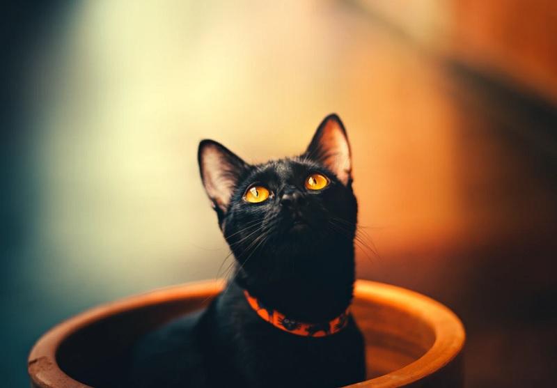 ループイフダンの黒猫さんのブログはどんなものか?