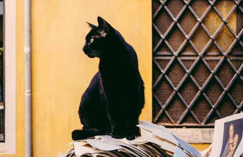 ループイフダンで見る黒猫さんの成績